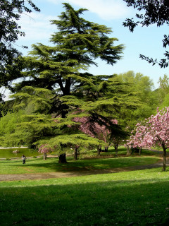 villa borghese_7